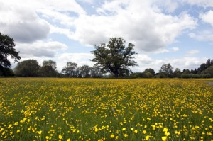 http://www.dreamstime.com/stock-photography-english-spring-meadow-image20295192